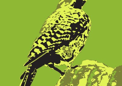 Cactus wren illustration by Emily Longbrake
