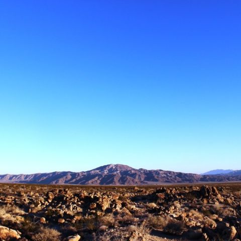 day 178: joshua tree, part 2