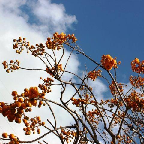 day 166: bodacious blooms in kauai