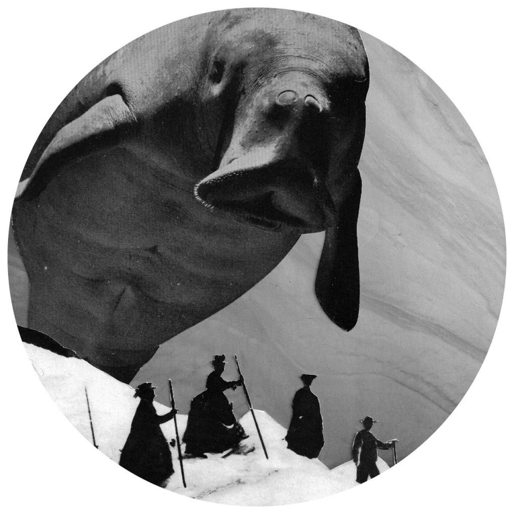 dugong climbers