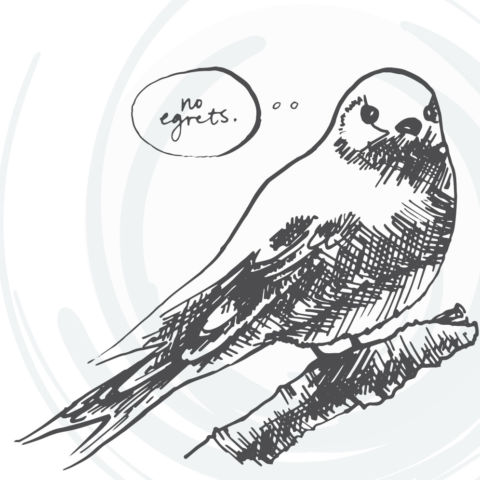 day 296: bird illustrations, part 2