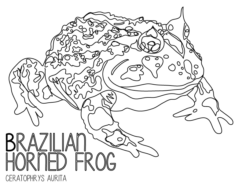 amphibian abecedary-03