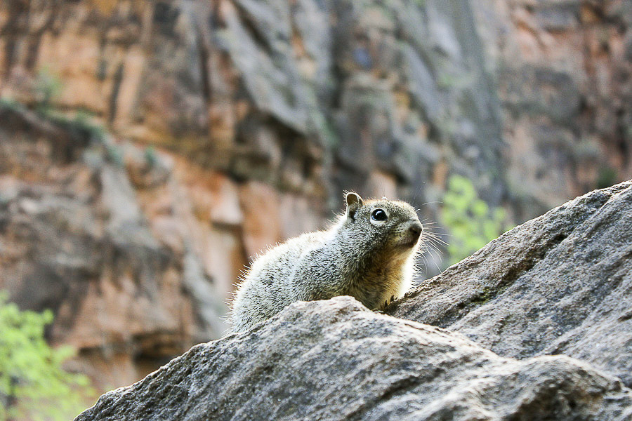 zion national park_7