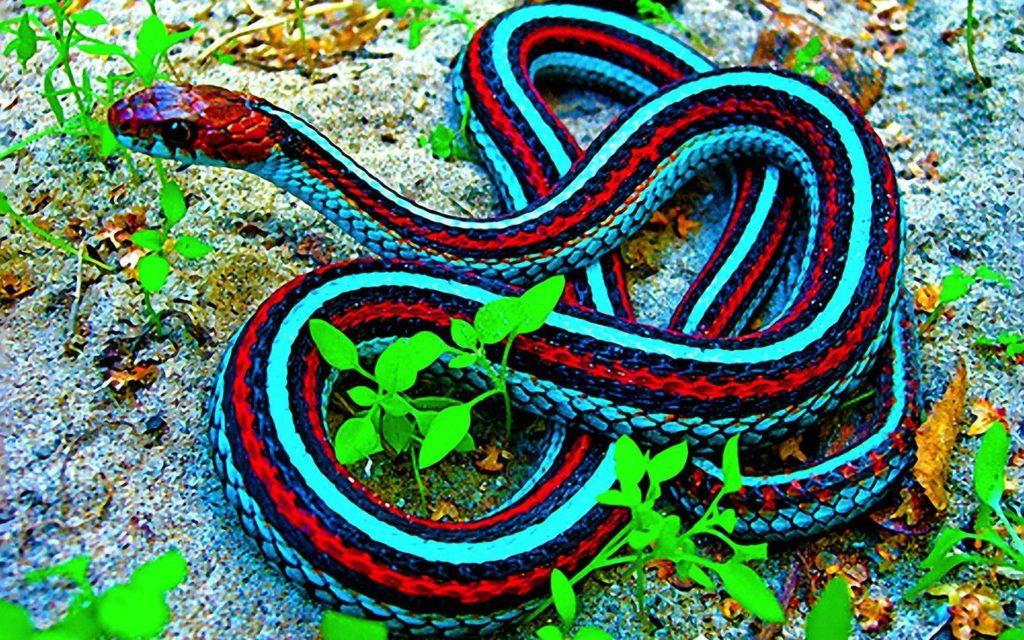 desktop-hd-coral-snake-bite-images