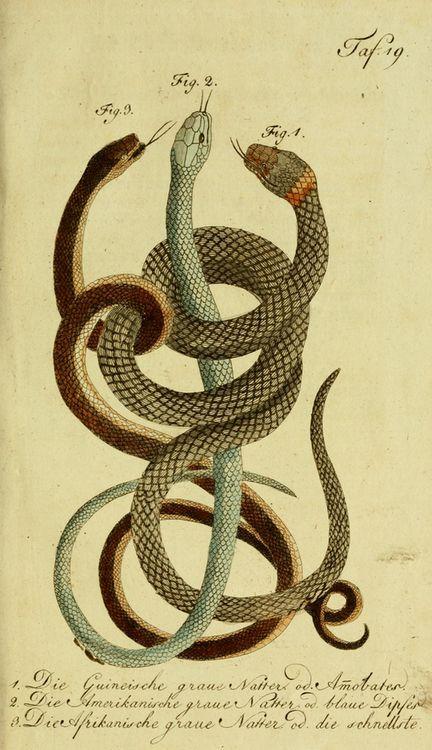 snake10