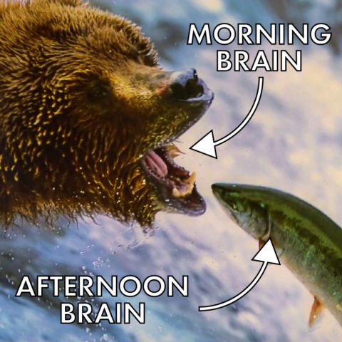 morning brain vs. afternoon brain